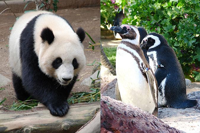 熊猫算法和企鹅算法
